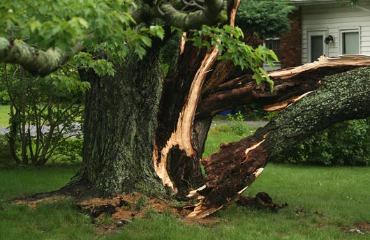 Bartlett Tree Experts Storm Damage